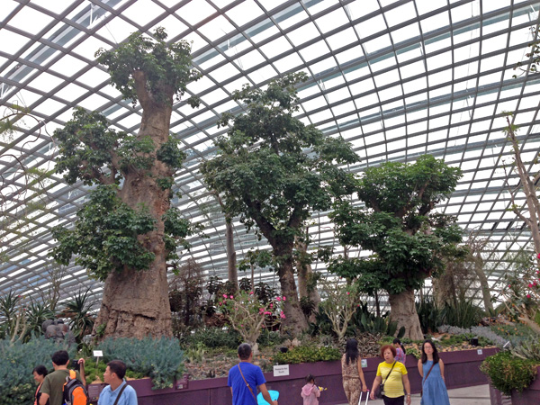 Baobabs Flower Dome
